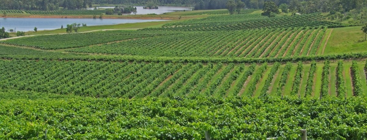Hop on Shuttle Vineyard Tours